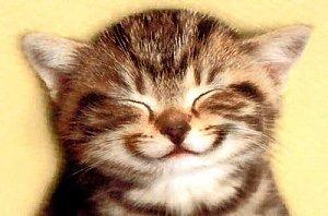 Donnez le sourire à un chat en ladoptant et en le rendant heureux !!!